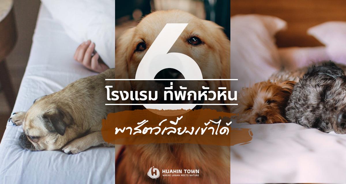 6 โรงแรมที่พักหัวหิน พาสัตว์เลี้ยงเข้าพักได้
